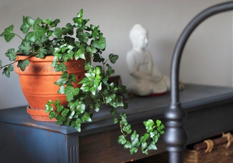 ต้นไม้ที่นิยมปลูกไว้สำหรับดูดสารพิษและฟอกอากาศภายในบ้าน