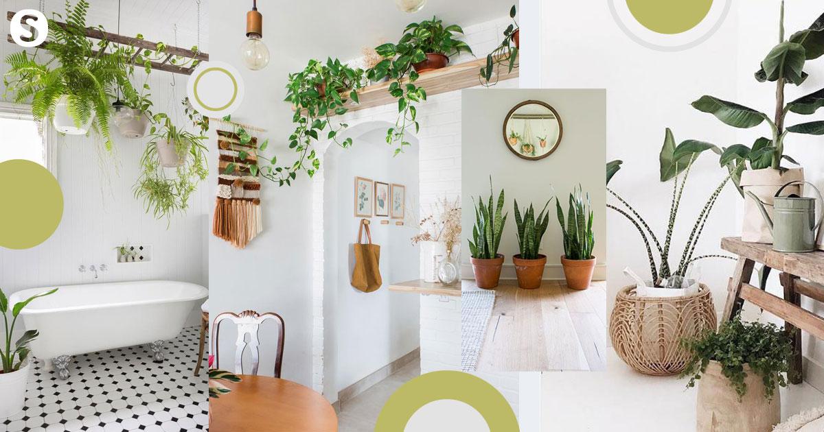 วิธีเพิ่มพื้นที่สีเขียวให้บ้าน สายธรรมชาติอย่าพลาด